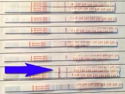 Testresultaten Sensitest ovulatietest: de dag met LH piek